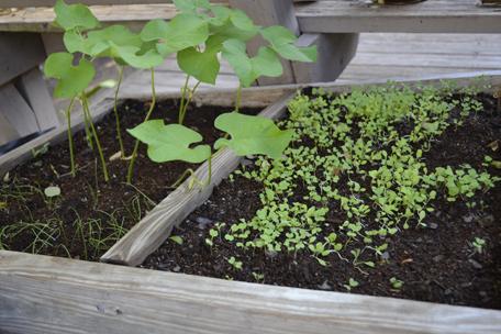 greens an' beans ...